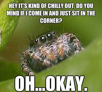 The sad world of the misunderstood house spider for How to stop spiders coming in your house
