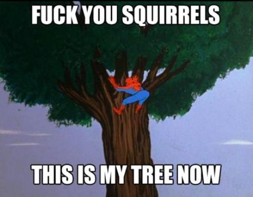 http://cdn.runt-of-the-web.com/wordpress/wp-content/uploads/2012/01/spidey-meme-squirrels.jpg