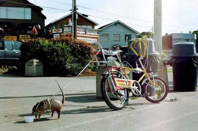 best viral pictures week 8 armadillo The Best Viral Pictures Of The Week, Volume 8