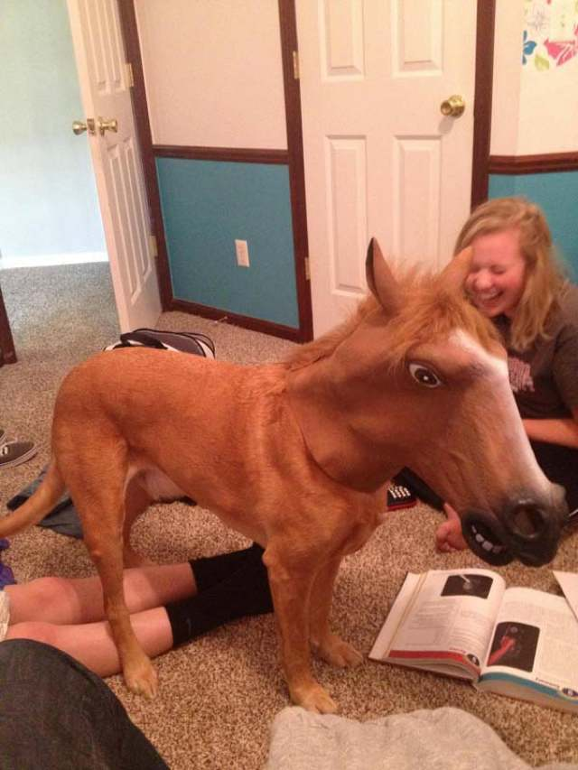 best viral pictures week 8 horse The Best Viral Pictures Of The Week, Volume 8