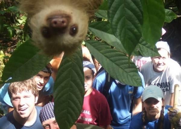 Sloth Bomb
