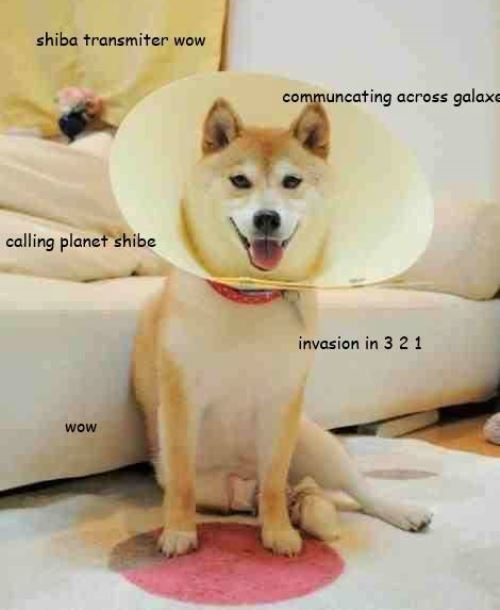 Shiba Meme Bagel Images & Pictures - Becuo